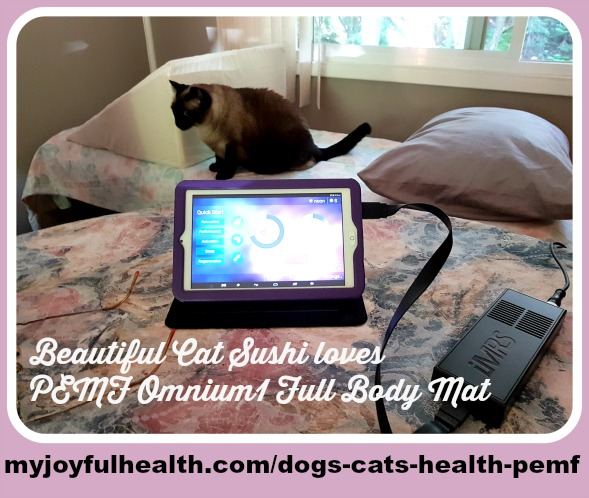 Dogs Cats Health PEMF Cat Sushi Loves PEMF Relaxation