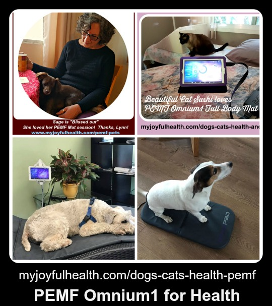 Dogs Cats Health PEMF Omnium1 for Health